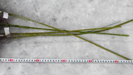 """Цветок искусственный ветка """"Водоросль цветная"""" серая 120 см, арт. 5646"""