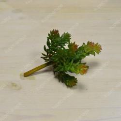 Цветок искусственный суккулент Сефаду 19см, арт. 4967