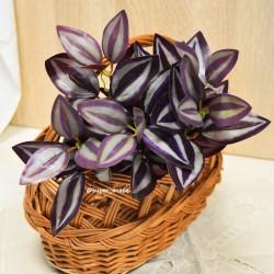Цветок искусственный куст традесканция h=32см, арт. 5417
